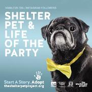 Shelter Pet Adoption PSA